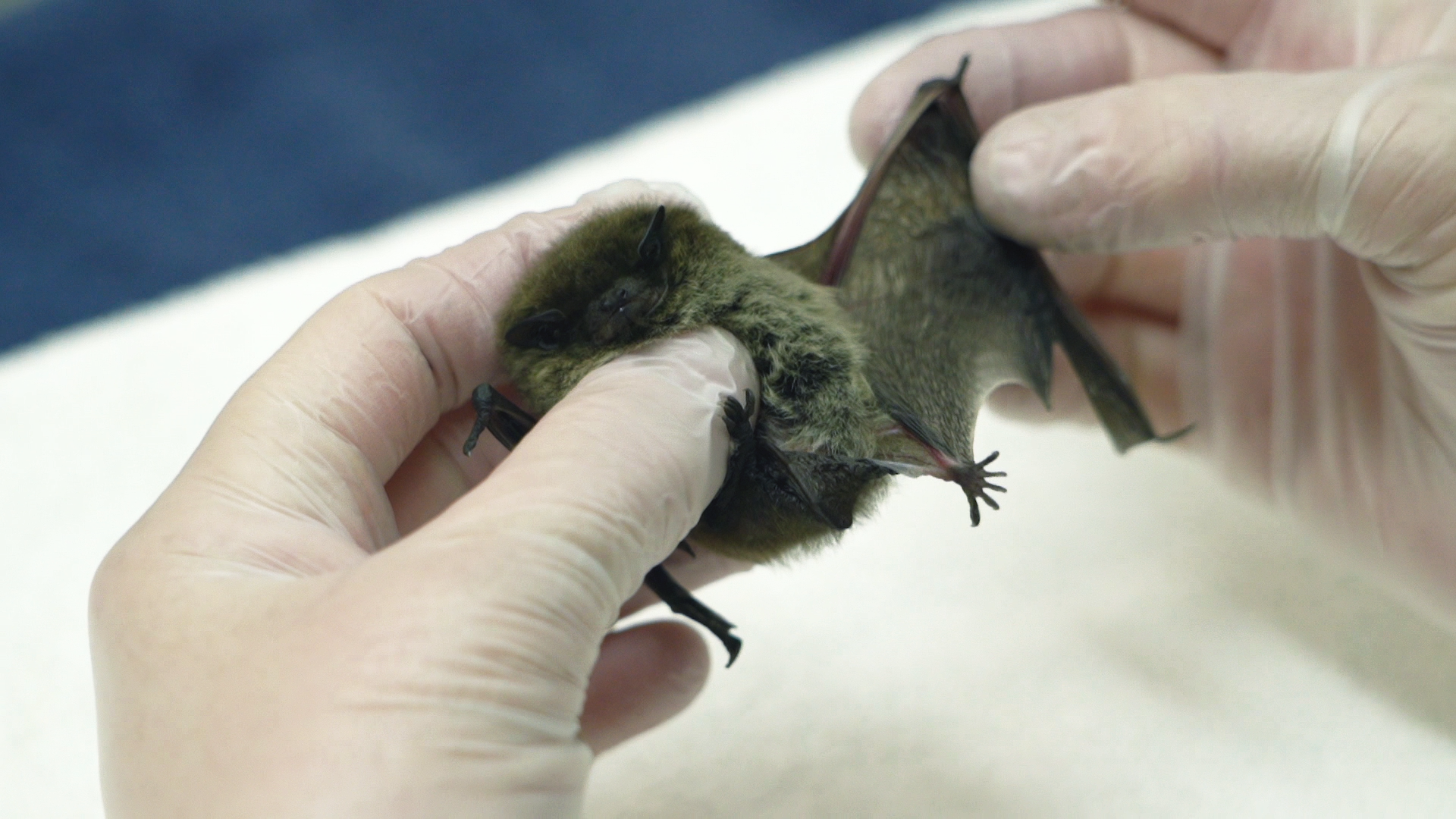 South Essex Wildlife Hospital - putting 'life' back into the 'wild'