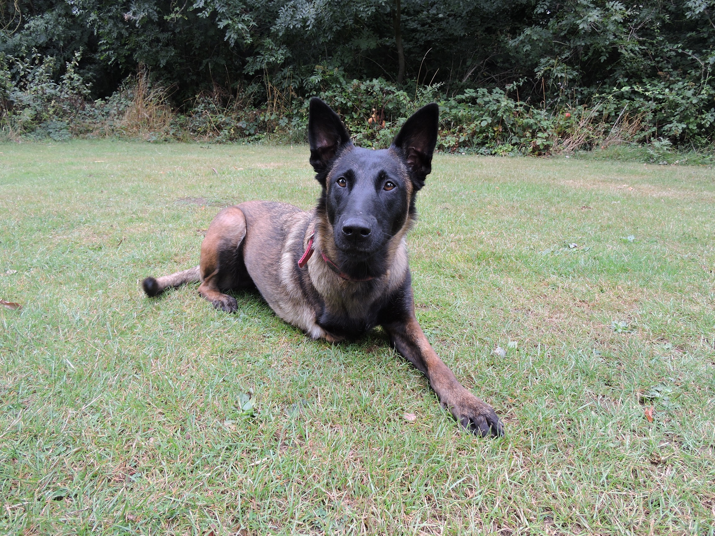 How your support is making a difference to the Essex Retired Police Dog Fund